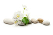 Apple tree flowers and stones