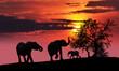 Fototapeten,afrika,elefant,kenya,landschaft