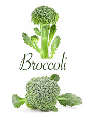 Cabbage broccoli isolated on white background