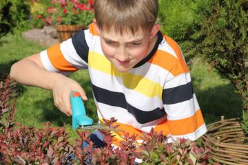 Boy cutting a bush