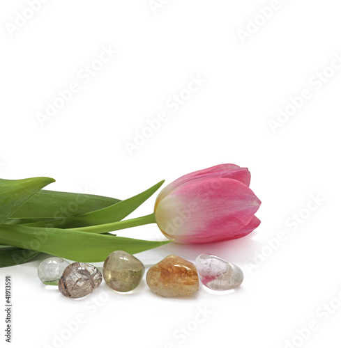 Tulip lying next to healing stones