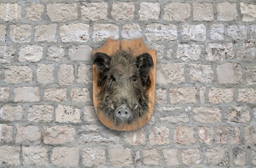 wild boar head on stone wall