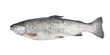 Fresh trout fish isolated