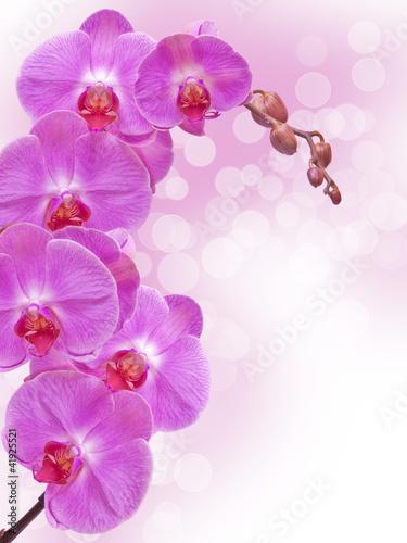 zamyka-up-storczykowy-kwiat