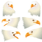 Bald Eagle raptor head set isolated on white poster