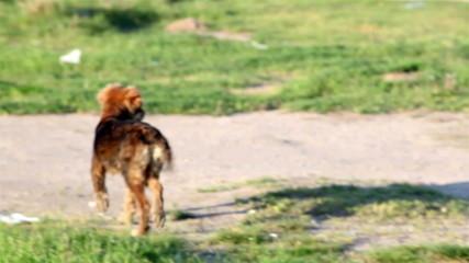 Vagrant dog on the street