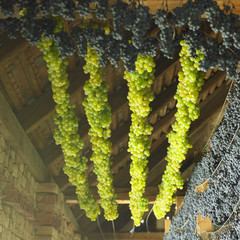 grapes drying for straw wine