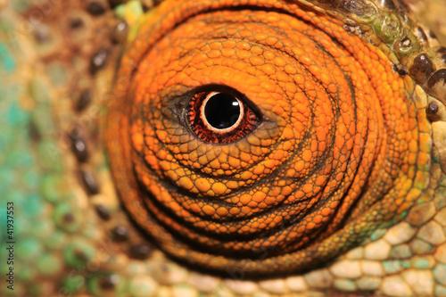 Fototapeten,madagascar,eye,macrophotography