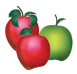 apple vector isolated