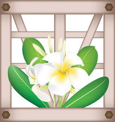 Fragipani on window background