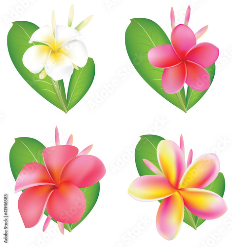 Set Of four flower Fragipani