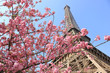 Paris in springtime, Eiffel tower
