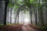 light at the end of a road through a green forest with fog