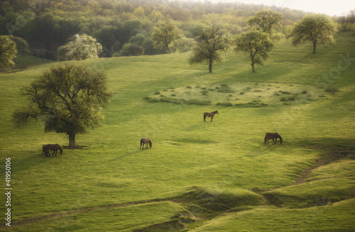 spring landscape with horse and trees at evening