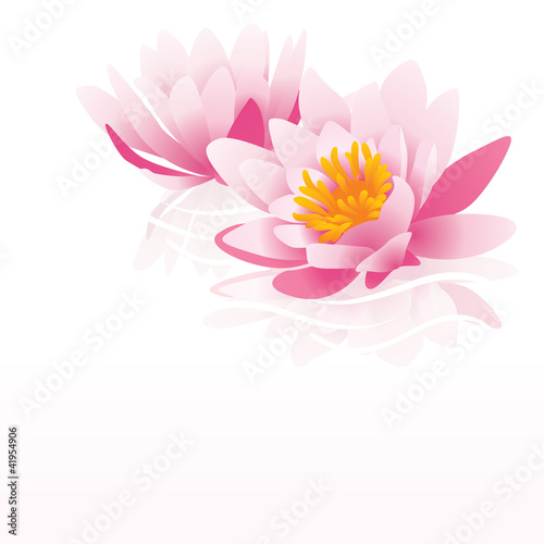 pink water lily vector illustration on white background