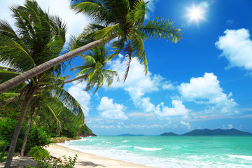 Coconut palms and beach in Thailand