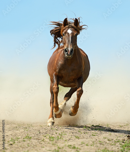 Fototapeten,animal husbandry,braun,fog,farm animal