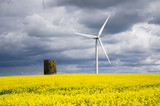 Windmill with rapeseed