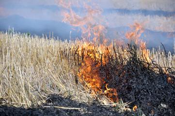 Пожар на убранном поле