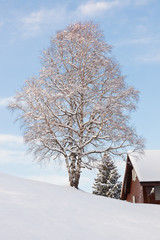 Baum im Winter mit Schnee