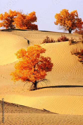Fototapeten,landschaft,ocolus,sand,himmel