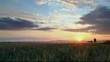 Sunset over agricultural green field - time lapse