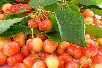 ciliegia melella varietà Maiatica
