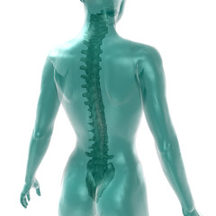 womens spine on white