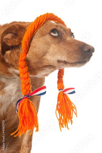 Funny Dutch dog looking op