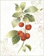 Beautiful decorative card  with cherry.