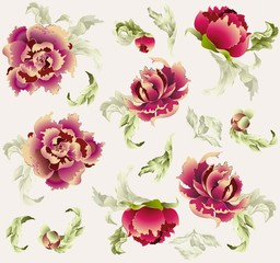 Seamless background. Illustration peony.
