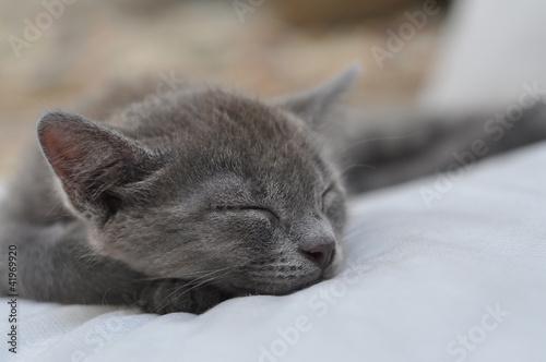 sleeping kitten © morena