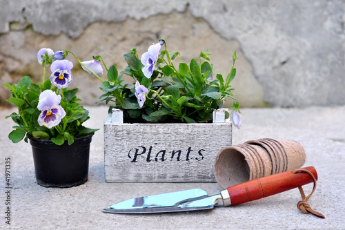 Canvas Pansies Pansies in the wooden box and garden tools