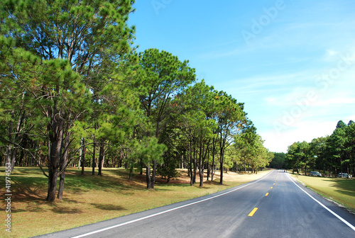 Pine And roads.