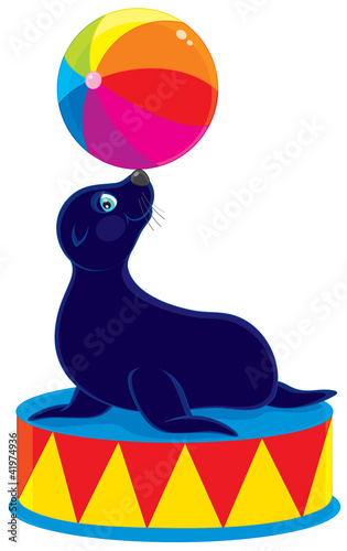 Circus sea bear with a colorful ball