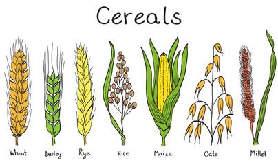 Cereals hand-drawn illustration