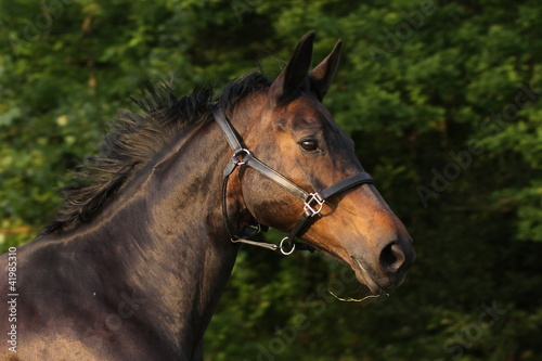 Fototapeten,pferd,tier,kopf,galopp
