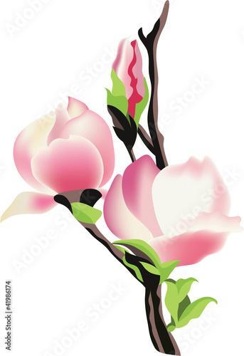 galaz-magnolia-wektorowa-ilustracja