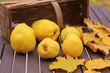 Korb mit Quitten und Herbstblättern