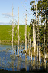 Farm dam with dead trees, Tasmania, Australia