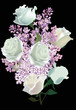 white roses in lilac flowers on black