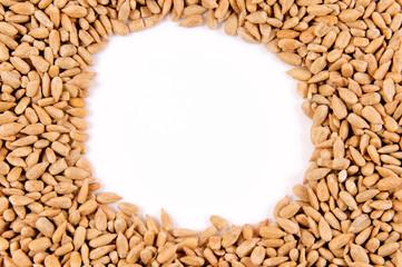 Sunflower seeds frame