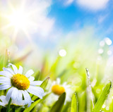 Fototapety art abstract background summer flower in grass with water drops