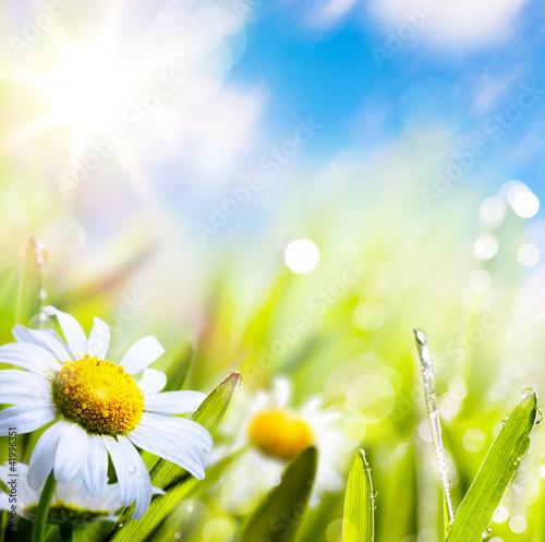 Fototapeten,hintergrund,gras,grün,blume