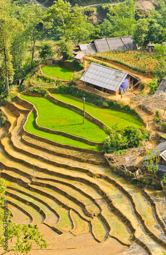 Vietnamese rice terraced fields