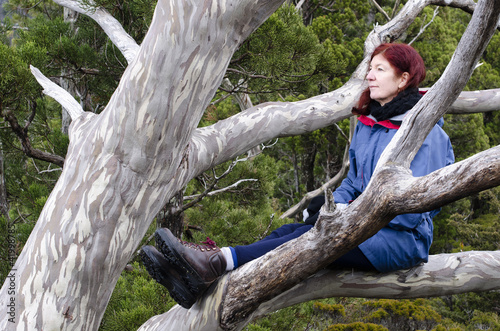 Woman in  tree. Cradle Mountain, Tasmania, Australia