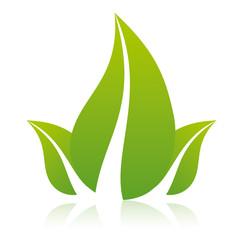 Trois feuilles naturelles