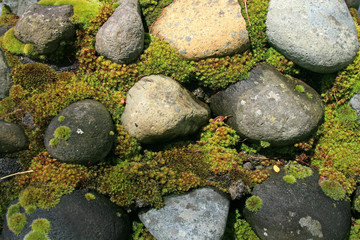 Moss Covered, Rock Wall