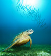 Sea turtle deep underwater