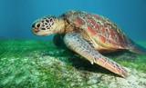 Fototapete Philippines - Close-up - Reptilien / Amphibien